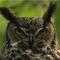 Глаукома в переводе с греческого - глаз совы.