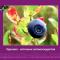 Eye supplements. Blueberry extract. Новости офтальмологии портала Орган зрения www.organum-visus.com