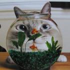 Look in aquarium!