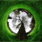 Зеленый глаз природы.