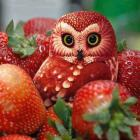 Strawberry Owl.