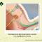 Распределение фоторецепторов в макуле и на периферии сетчатки (retina). Новости офтальмологии портала Орган зрения www.organum-visus.com